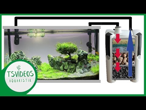 Aquarium Filter - Funktionsweise - TSVideos-Aquaristi ...
