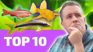 Top 10 EASY Fish That Every BEGINNER Needs by Aquarium Co-Op