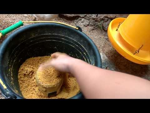 Video Ayam Kampung Super Cara Jitu Panen Ayam 45 hari dan Kndang Tdak Bau dgn Menggunakan EM4 download in MP3, 3GP, MP4, WEBM, AVI, FLV January 2017