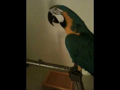 Papegoja uttrycker sin frustration