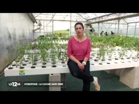 Hydroponie: la culture sans terre - Reportage JT M6 - Serre hydroponique Les Sourciers