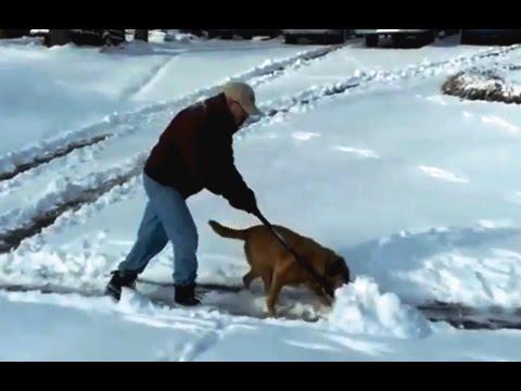 Koirat lumitöissä kokoelma