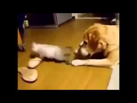 Lustige Katzen Videos – verschiedene Katzen