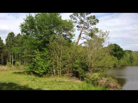 40 acres Cobbtown, GA