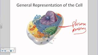 Introduction To The Cell And Plasma Membrane.wmv