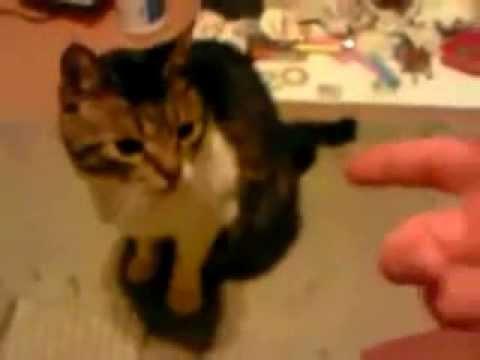 spara un colpo con la mano, il gatto finge di accasciarsi!