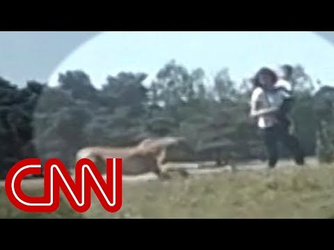 Family Chased By Cheetahs In Safari Park