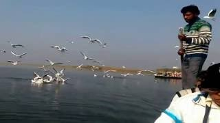 Nal sarovar bird sanctuary full download video download mp3 download music download