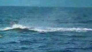 Каякинг с китом