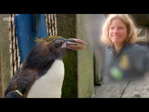 BBC The Zoo series 1 episode 5 - The Humany Penguin