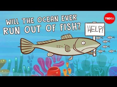 תעשייה בשקיעה: רוב הדיג בעולם שורד רק בזכות תמיכה ממשלתית