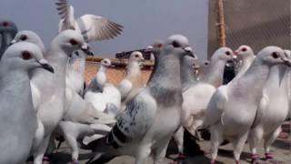 Bareilly India  city photos : Munna Qureshi Azam Nagar Bareilly India Mo no 8791273090