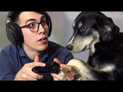 GAMING WITH PETS IS GR8