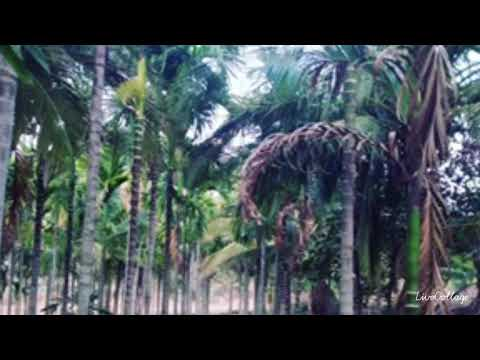 Farm land for sale In Lingadahalli