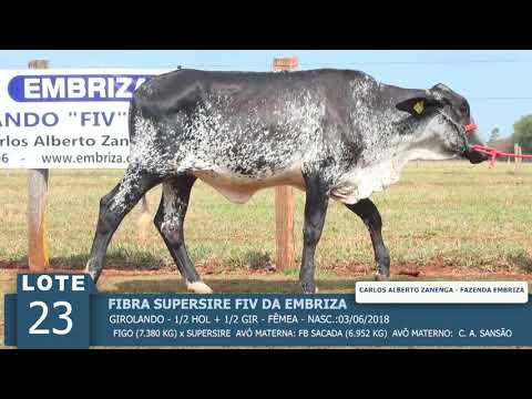 LOTE 23 - FIBRA SUPERSIRE FIV -