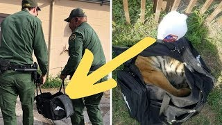 Bag Abandoned At Mexican Border Contains The Most Heartbreaking Cargo by Did You Know Animals?
