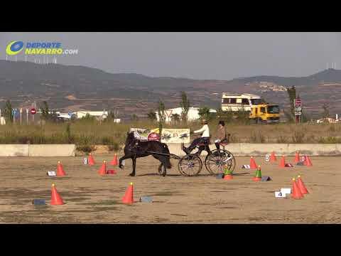 Campeonato navarro de enganches Olite 2017 5