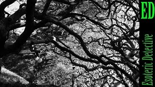 Science shows trees communicate with each other