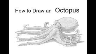 Видео: осьминога простым карандашом (подробный урок)