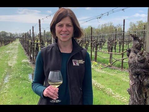 Taste with Heidi: Chardonnay