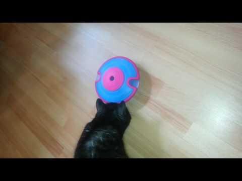 Testbericht: Intelligenzspielzeug für Katzen