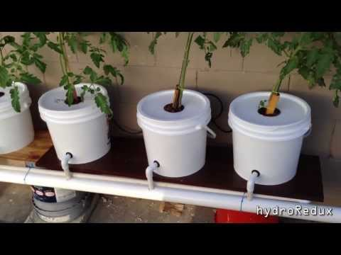 Cheap DIY Bato/Dutch Bucket Hydroponic System