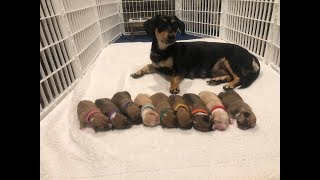 Rescued mom and babies are getting ready for their forever families| The Dodo Project Home LIVE by The Dodo