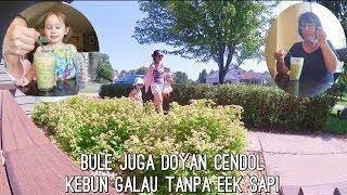 Download Lagu BULE JUGA DOYAN CENDOL | KEBUN GALAU TANPA EEK SAPI | MADDY KE DOKTER | ANAK 3 THN NYANYI LAGU INDO Mp3