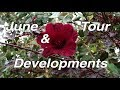 June Garden Tour | Walk with Kaye | VlogJune Garden Tour | Walk with Kaye | Vlog<media:title />