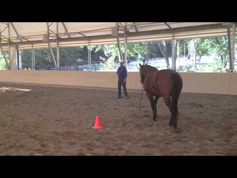 Habits of a Horseman – Figure 8 Online