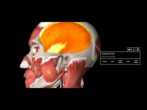Headache Types Explained!
