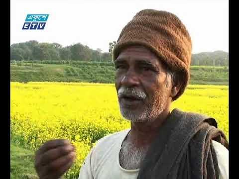 জামালপুর ও চাঁপাইনবাবগঞ্জে সরিষার আবাদ জনপ্রিয় হয়ে উঠছে