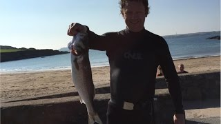 Pembrokeshire United Kingdom  City pictures : Spearfishing Bass - West Pembrokeshire, South Wales, UK September 2015