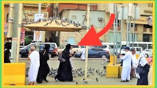 Medina Saudi Arabia  city photos gallery : ✔ Makkah Madinah Street Life Scenes People Saudi Arabia Travel Video Guide