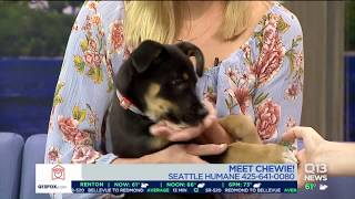 Seattle Humane Society pet of the week