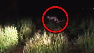 Video 11 Scary Creatures Accidentally Caught on Camera MP3, 3GP, MP4, WEBM, AVI, FLV Januari 2019