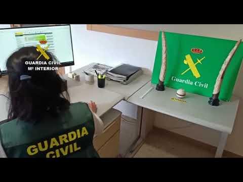 La Guardia Civil aprehendió dos colmillos de elefante en Cambre