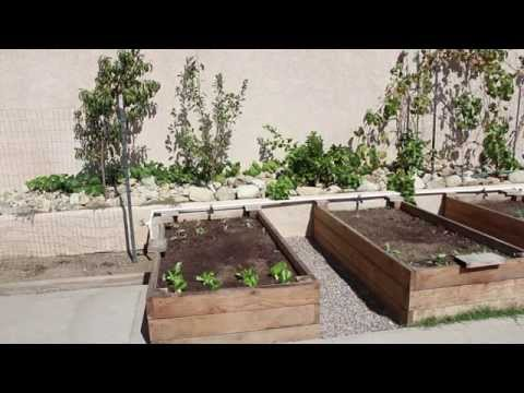Southern California Raised Bed Garden Update 10-11-14