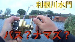 利根川でバス釣り?ナマズ釣り?