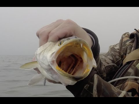 Winter wade fishing on Baffin Bay for Speckled Trout