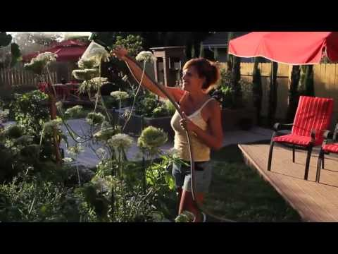 My Best Gardening Trick – Quick, Simple, Cheap