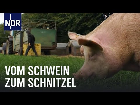 Schweinefleisch: Vom Ferkel zum Bioschnitzel | Wie  ...