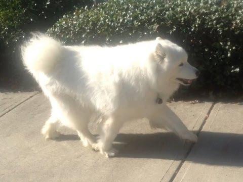 Dog Arthritis - How I saved an old dog with home treatment for canine osteoarthritis.