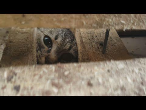 Спасение кошки из гаражного плена