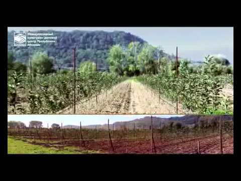 Abkhazia: Market Profile