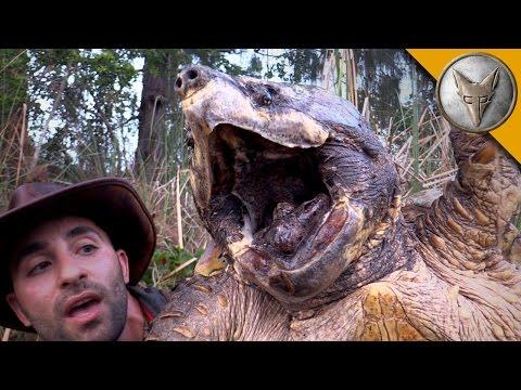 The Biggest Turtle  canreide
