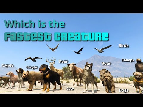 GTA V Which is the fastest Creature | All Animals, Fishes & Birds tested