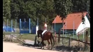 Recenze (o knize Somatopsychologie koní)