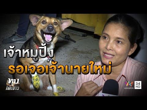 """ทุบโต๊ะข่าว : """"หมูปิ้ง""""หมาอาภัพเจอเจ้านายใหม่แล้วเลิกซึมคนแห่เยี่ยมขอเลี้ยงไม่ขาดสาย19/09/60"""