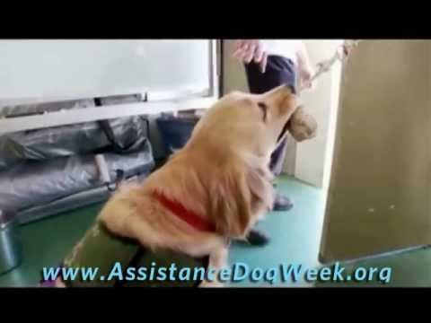 International Assistance Dog Week PSA 2011